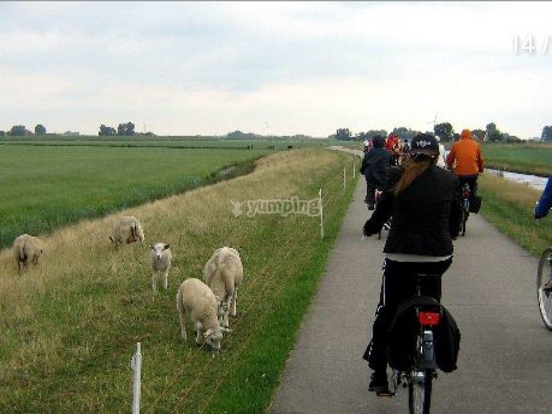 Olanda in bicicletta