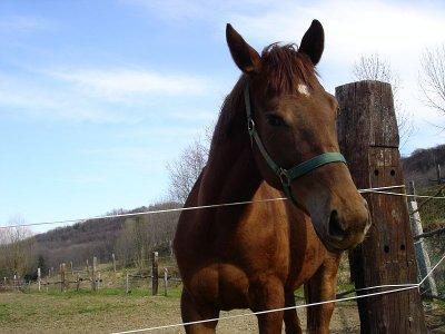 Corte dei cavalli