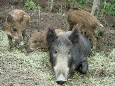 Parc Animalier d'Introd