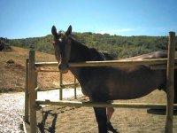 Il cavallo, esperienza emozionante