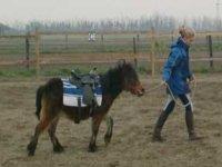 Un Pony