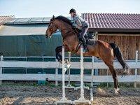 a lezione di equitazione