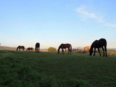 Centro Ippico Cavallo Maremma