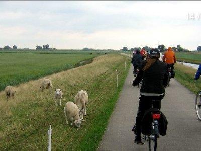 Luglio/agosto in Olanda in veliero e bicicletta