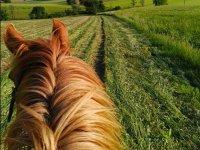 Cavallo e prateria