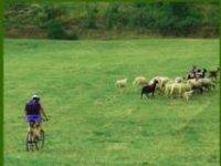 Un pastore sportivo?