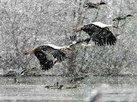 Volande nella Neve