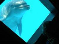 Osservando i Delfini