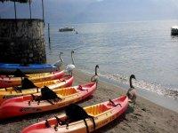 Anche i cigni vanno in kayak