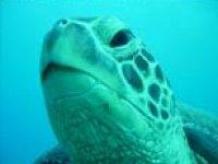 Venite a conoscere il nostro diving centre