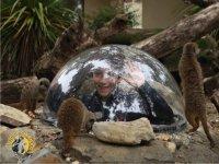 il tunnel dei suricati