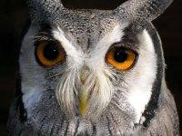 Guardami negli occhi