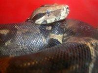 Uno dei nostri serpenti