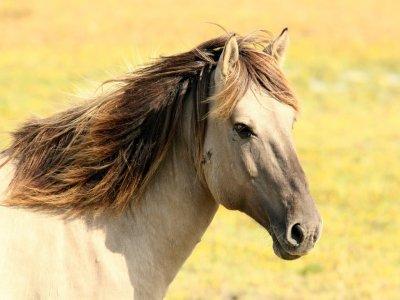 Trastevere a cavallo+lezione di equitazione 1,30h