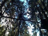 Tra un albero e l' altro