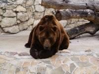 L' orso