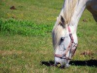 Cavallo che mangia