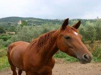 uno dei bellissimi cavalli
