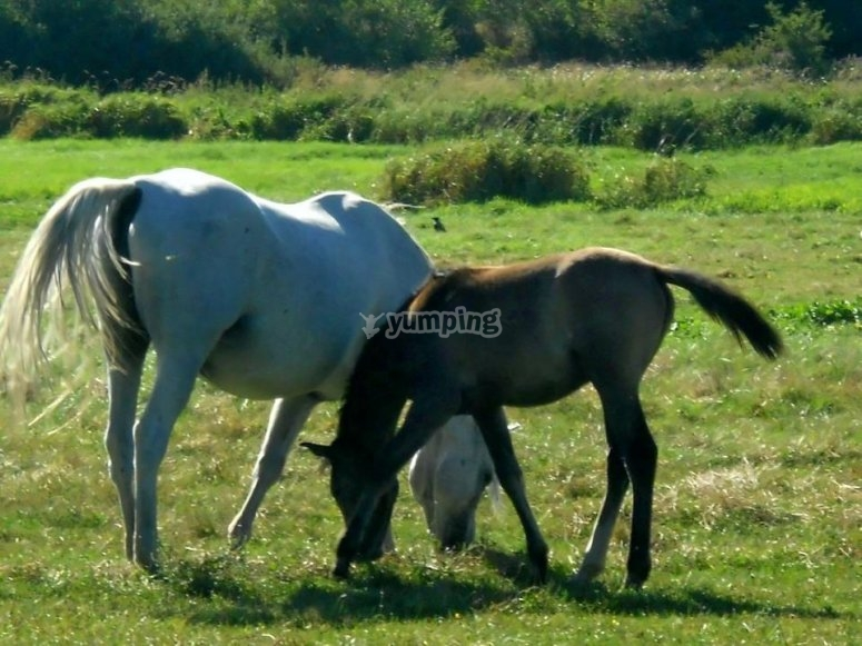 25 maggio a cavallo