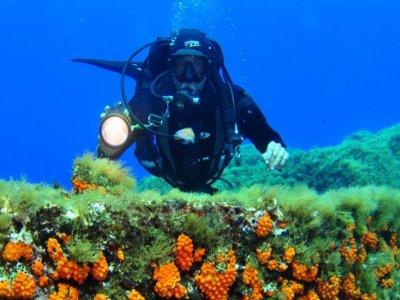 Terraferma Diving Diving