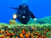 Diving in Sicilia