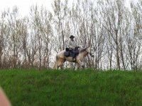 Horse riding in the green