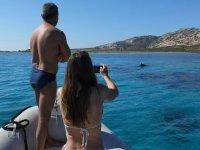 Ci sono anche i delfini