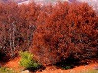Un'Autunno a Rosso Laga