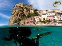 Scilla diving