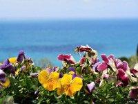 i fiori della costiera