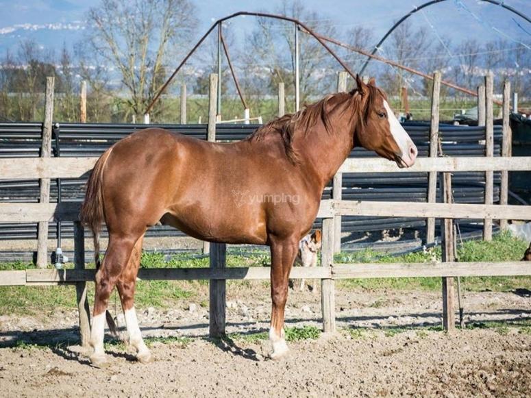 Uno dei nostri amici equini