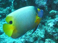Fish with yellow fin
