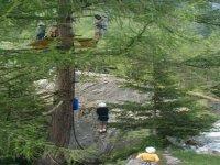 Percorso tra gli alberi