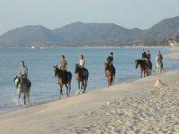 Equestrian trekking