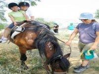 Tutti sul Pony