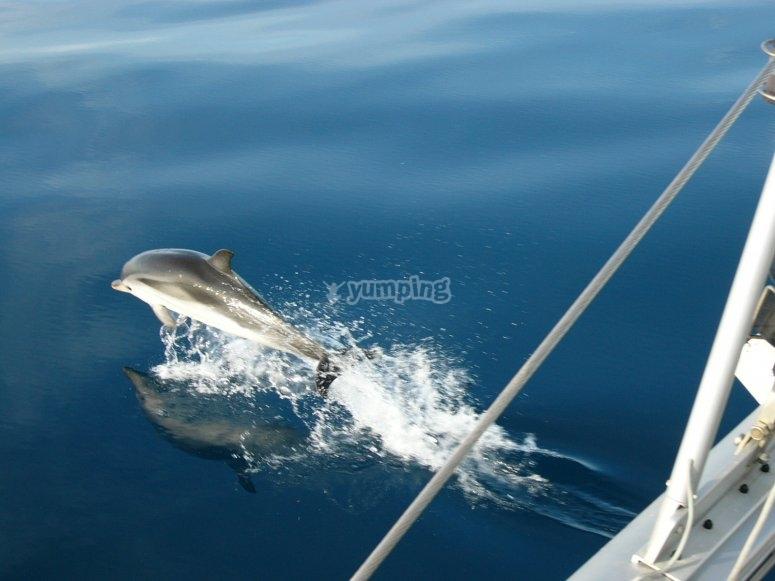 Con i delfini