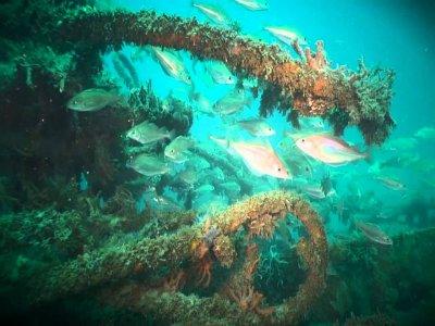 Adriatica Club Charter Diving
