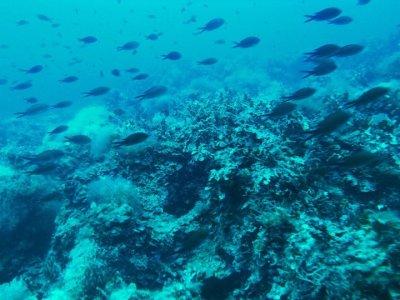 Vendicari Diving Center