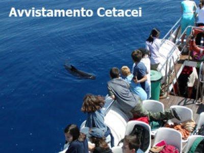 Liguria Via Mare Whale Watching
