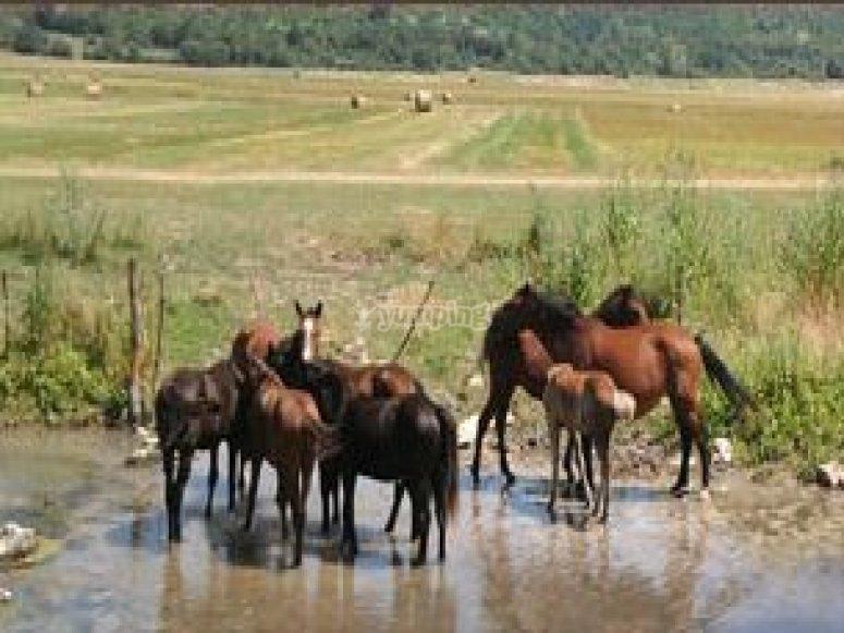 offerta passeggiata a cavallo.jpg