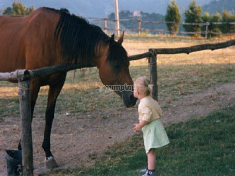 bimbo_cavallo