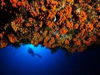 Nuotare nel profondo mare