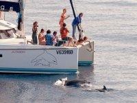 Avvistamento delfini