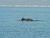 Crociere Whale Watching