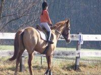 Lezioni di equitazione durante il soggiorno