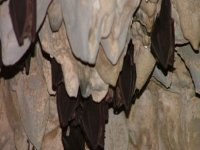 Limestone formations and bats