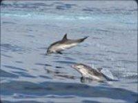 Seguiti dai delfini