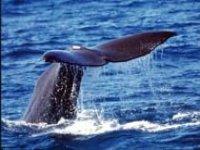 Avvistamenti balene