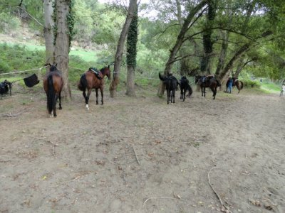 Weekend di San Valentino con passeggiata a cavallo