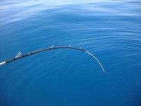 Pesca a bolentino.JPG